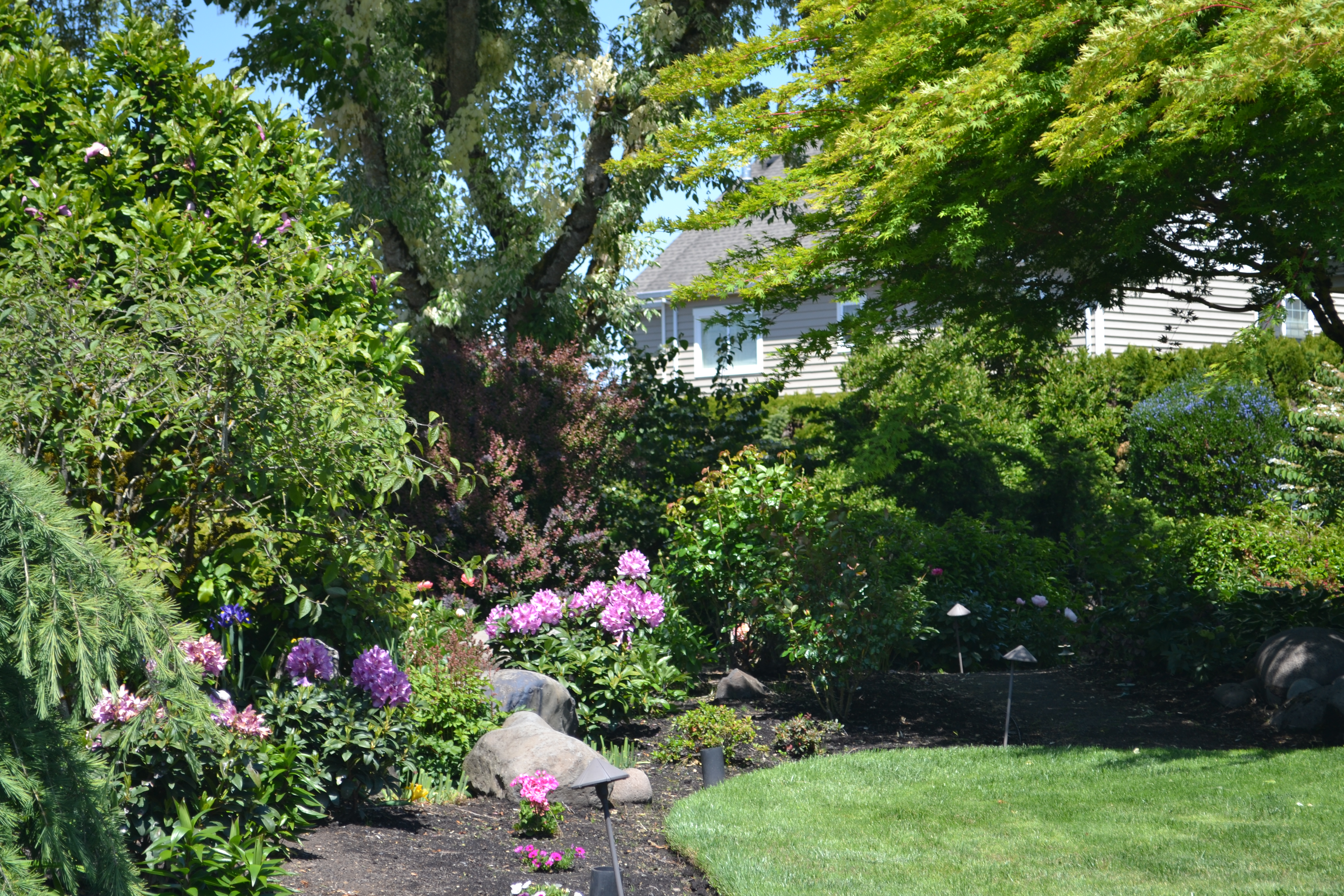 Yard Of The Month – June 2021